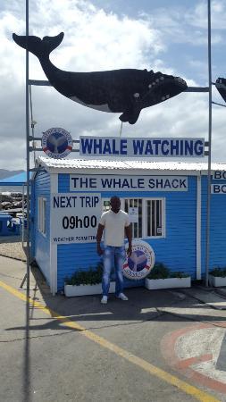 Hermanus, Νότια Αφρική: whale watching