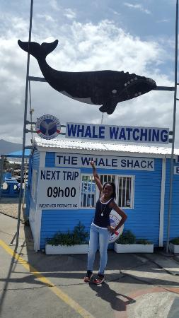 Hermanus, Zuid-Afrika: Huge whale