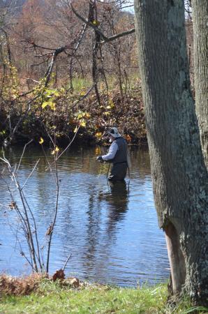 Sperryville, VA: Flyfishing on property