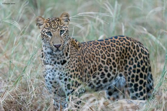 Pashan Garh : Leopard spotted at Pann National Park