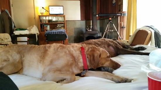 The Andiron -- Seaside Inn & Cabins: 20151104_162129_large.jpg