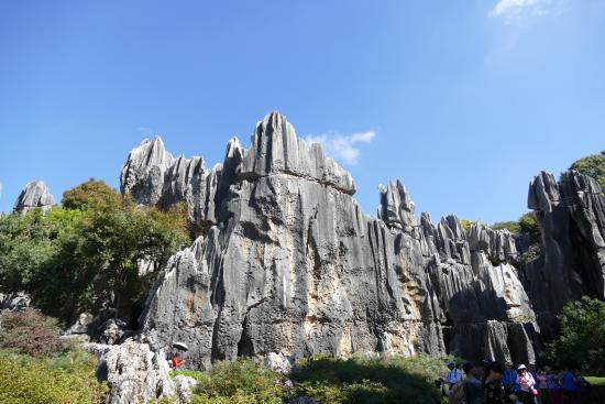 Grand Stone Forest