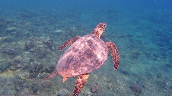 TUI MAGIC LIFE Kalawy: Podmořský svět