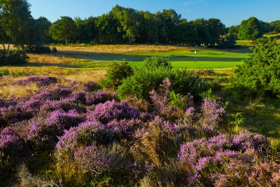 Вудбридж, UK: 11th Green - Heath Course