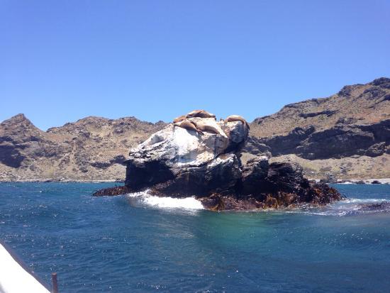 Punta Choros Photo