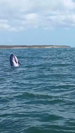 Dolphin Connection Texas : Love in the ocean..