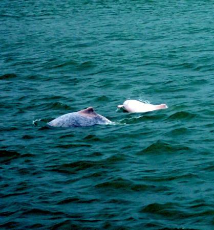 香港海豚观察有限公司 - 一日游