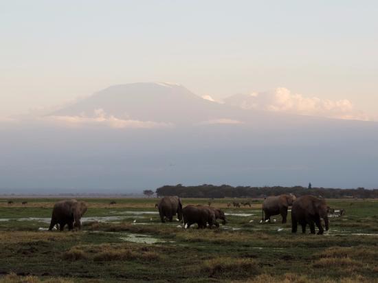 Tanke Tours: Amboseli : Elefanten am Kilimanjaro