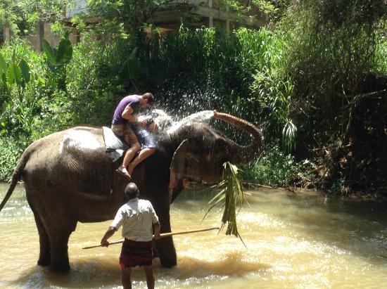 بينتوتا, سريلانكا: pinnawala