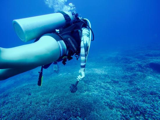 Diving in the gilis foto van manta dive gili air resort gili air tripadvisor - Manta dive gili air resort ...