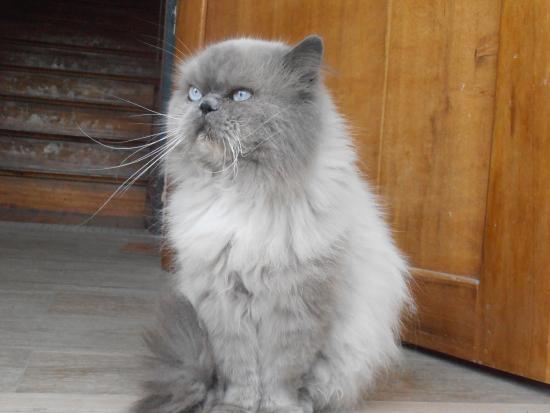 Posada Tambuca: The pussy cat, as beautiful as shy