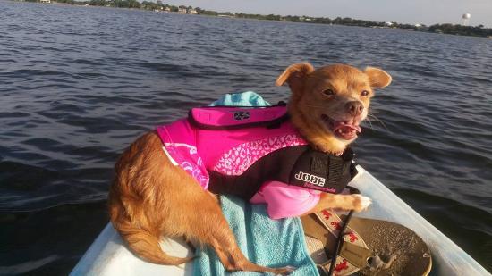 Faraway Inn: Our dog loved kayaking