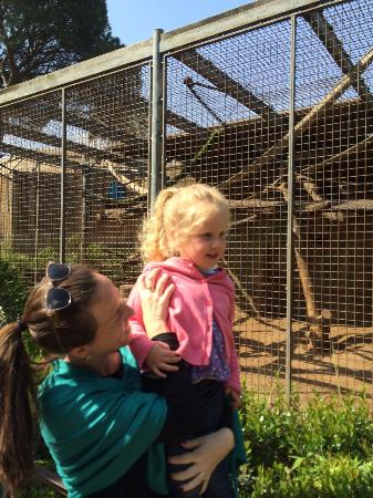 Negev Zoo: By the monkeys' cage