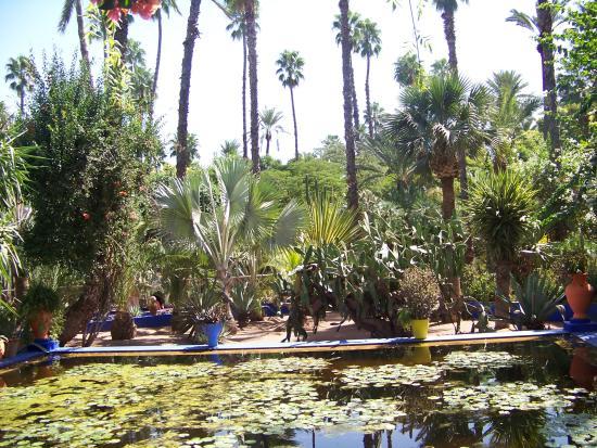 N nuphars picture of jardin majorelle marrakech for Jardin majorelle