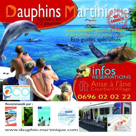 Dauphins Martinique: Sorties dauphins