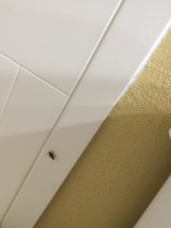 奧蘭多舒適旅館 - 維斯塔湖照片