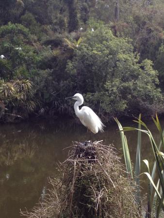 White Heron Sanctuary Tours: White Heron tour-Nov 15