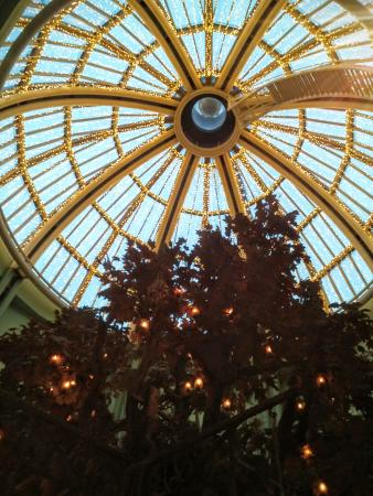 The Botanist: The ceiling!