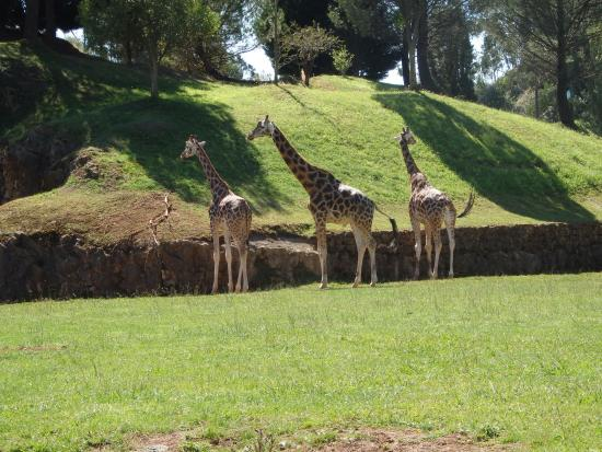Parque - Picture of Cabarceno Nature Park, Obregon - TripAdvisor