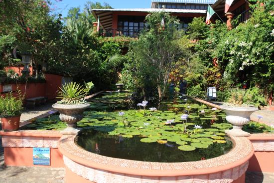 Pond picture of vallarta botanical gardens cabo - Puerto vallarta botanical gardens ...
