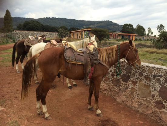 Rancho Las Cascadas Riding Tours: photo1.jpg