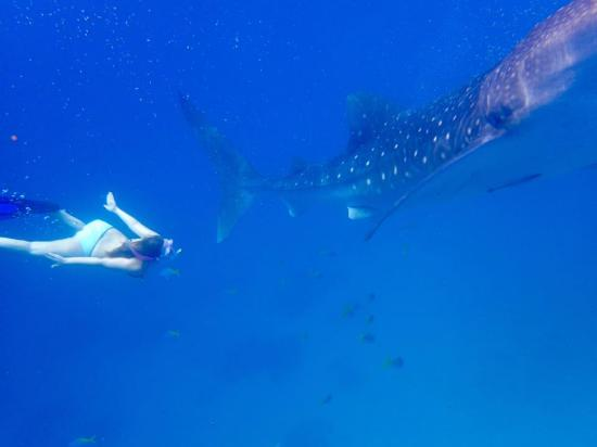 Granada Beach Resort: Swimming with the Whalesharks