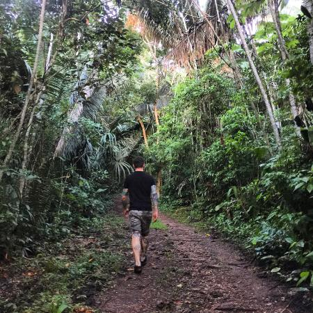 Lower Dover Field Station & Jungle Lodge: Walking the Jungle Trail