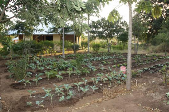 Longido, Tanzanya: Fortunatas grows most of the vegetables used by the cooks in the guesthouse's garden