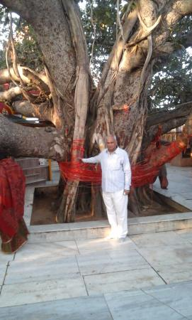 Muzaffarnagar, India: Akshay Vriksha