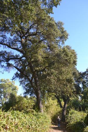 Things To Do In Modesto >> Caswell Memorial State Park, Ripon - TripAdvisor