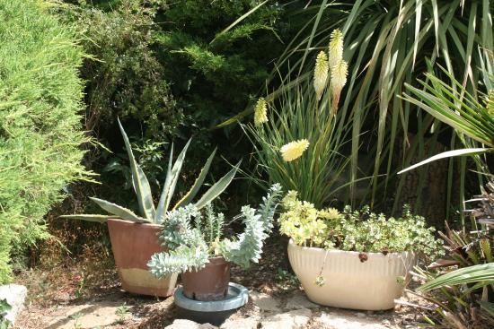 Cabrieres, Prancis: Jardin fleuri