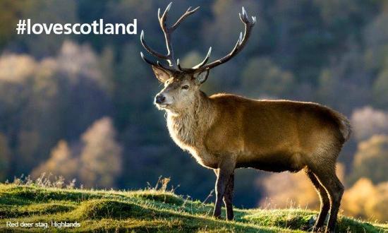 West Loch Hotel: #lovescotland
