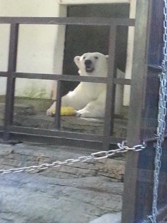 愛媛県立とべ動物園, ピース