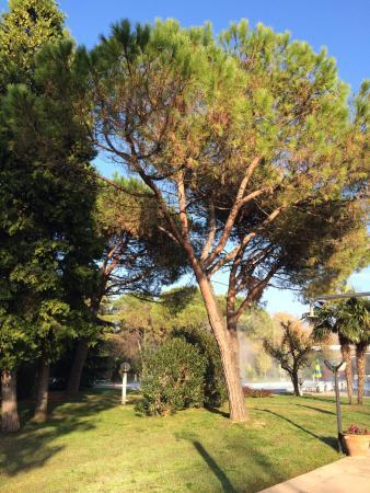 Hotel Terme Neroniane: территория