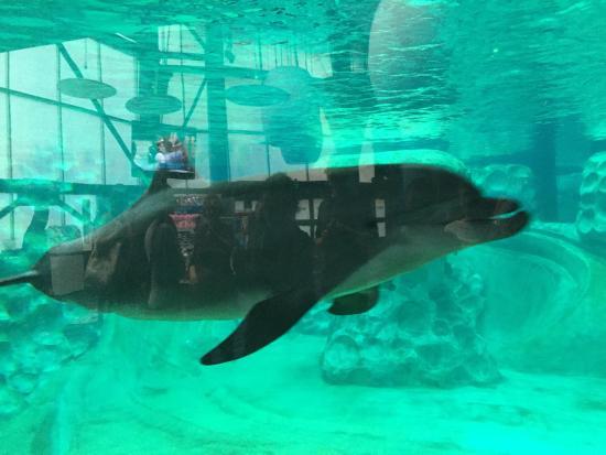 Picture Of Georgia Aquarium Atlanta
