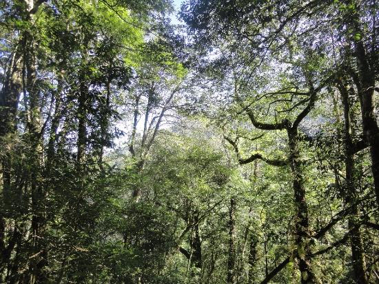 台灣新竹縣:forest