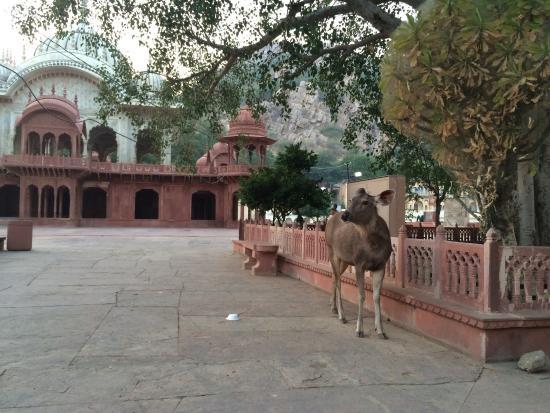 Moosi Maharani Ki Chhatri Photo