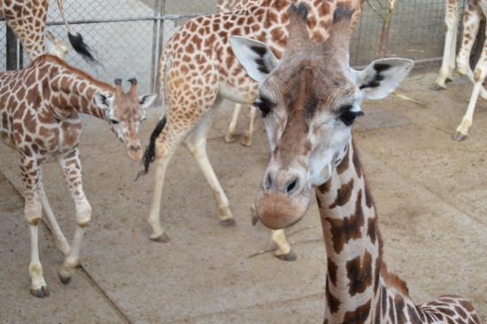 Olomouc Zoo