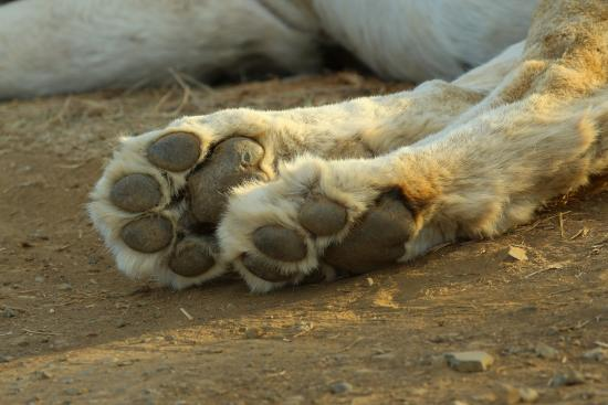 My dear you have lovely paws