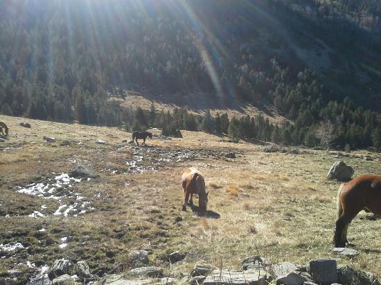 Parroquia de Ordino, Andorra: Bonito parque natural