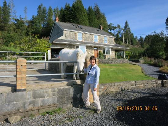 Llanwrda, UK: Scrap the donkey and admirer