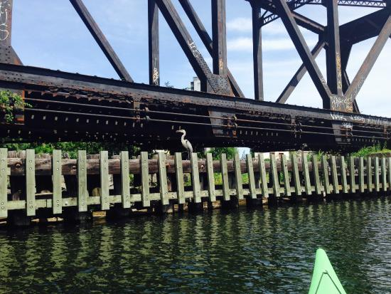 H2O Adventures : Lot's of wildlife on the Canal