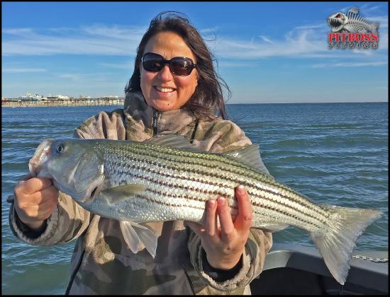 November ocean city stripe bass maryland rockfish for Md fishing license cost
