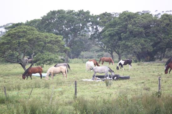 Kei Mouth Guest Lodge : Happy Ponies