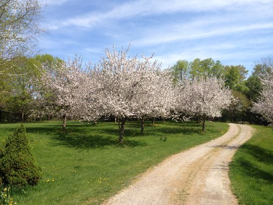Taraden Bed and Breakfast: Apple Blossoms in Spring