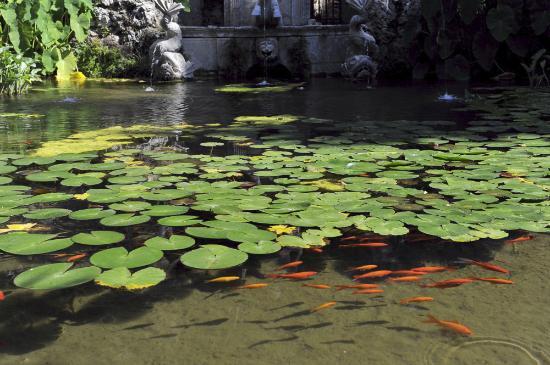 Trsteno, Croacia: Прудик с карпами