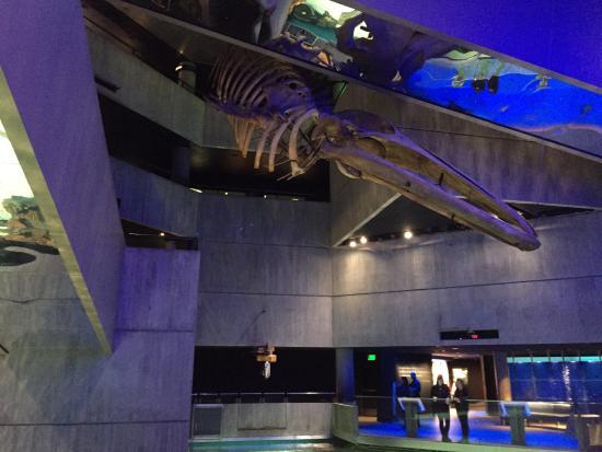 National Aquarium Photos National Aquarium Baltimore