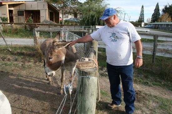 Cheviot Motel and Holiday Park: Getting up close & personal with the locals