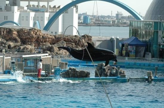 サンゴ - Picture of Port of Nagoya Public Aquarium, Nagoya - TripAdvisor