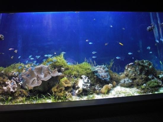 サンゴ - Picture of Port of Nagoya Public Aquarium, Nagoya - TripAdvisor